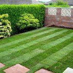 Как правильно выбирать рулонный газон для дачи