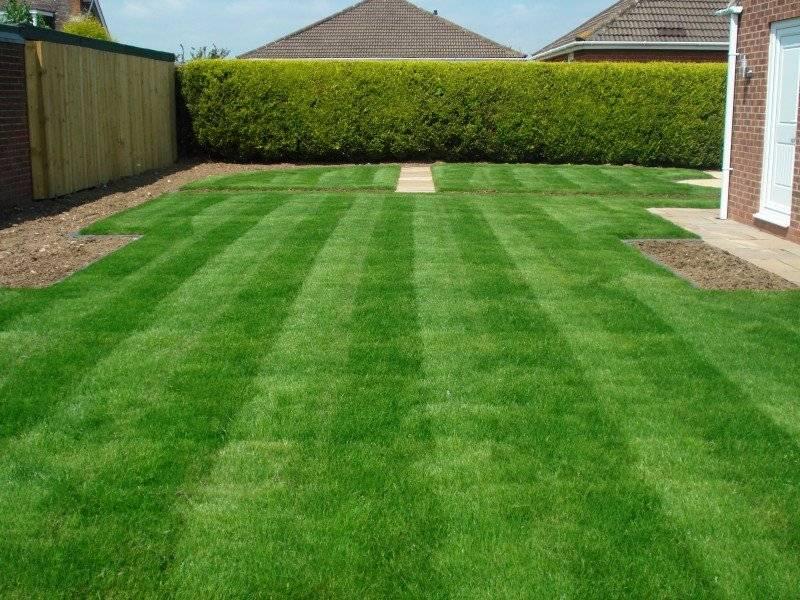 Как выбирать рулонный газон для дачи