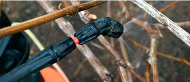 Опрыскайте виноградник от болезней