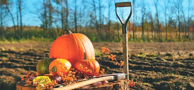 Перекопка почвы в октябре
