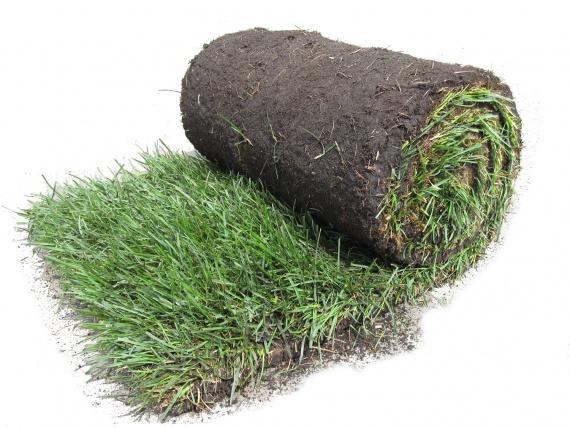 Что из себя представляет рулонный газон