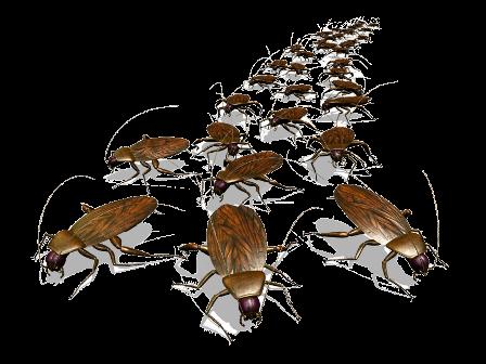 Борьба с тараканами в помещениях