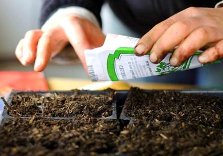 Подготовка почвы и контейнеров для рассады помидор