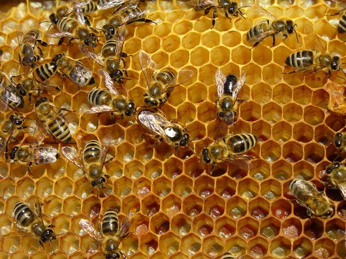 83063024_4783955_beehive