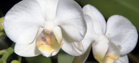 Мир растений удивителен