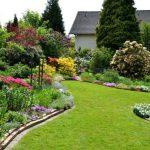 Украсьте свой сад газоном