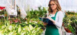 Флорариум – новое веяние в искусстве озеленения