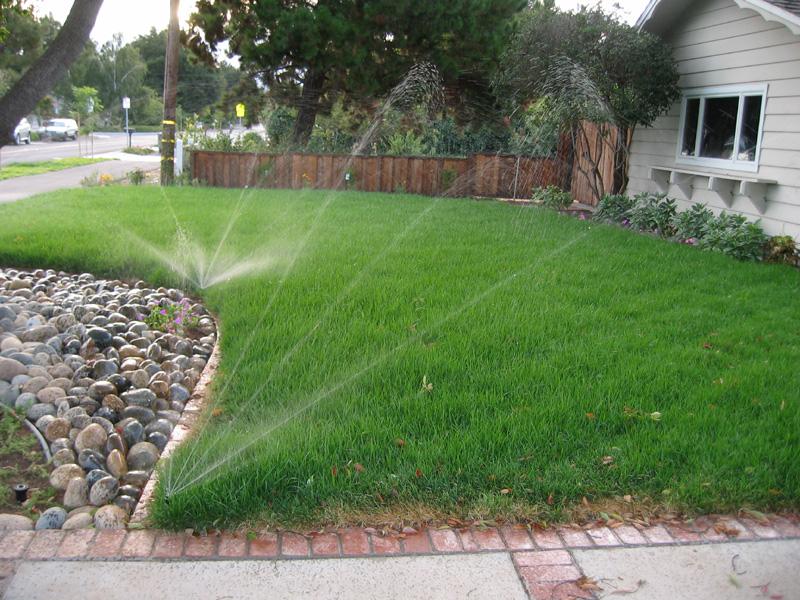 Как часто поливать газон