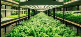 Кресс-салат: чем полезен и как выращивать?